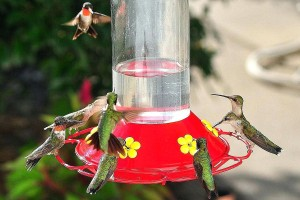 bird-feeders-2